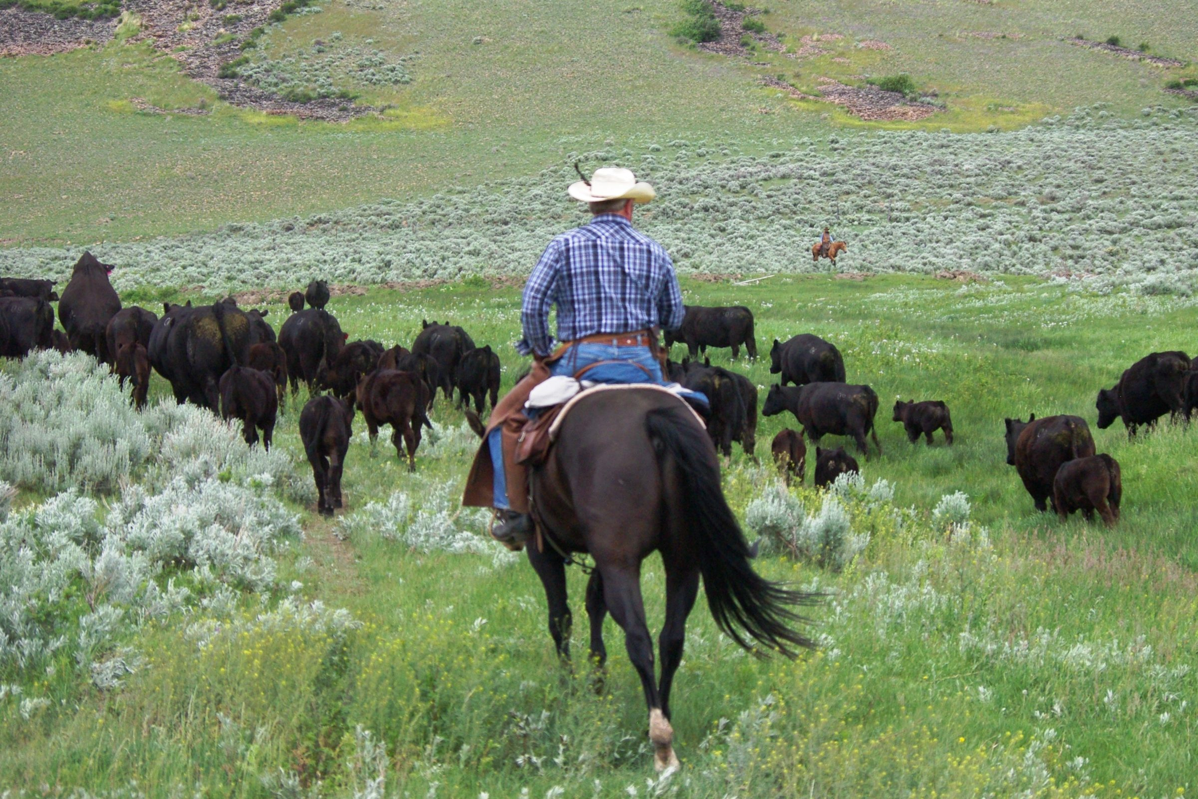 Bonanza Creek Country Montana