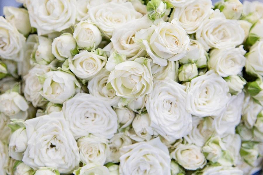 Spray Rose Josephine