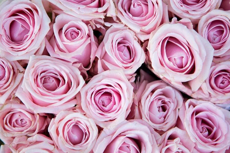 Rose Lazise