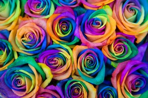 Vendela Rainbow Rose