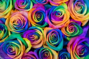 Vendela Rainbow Rose