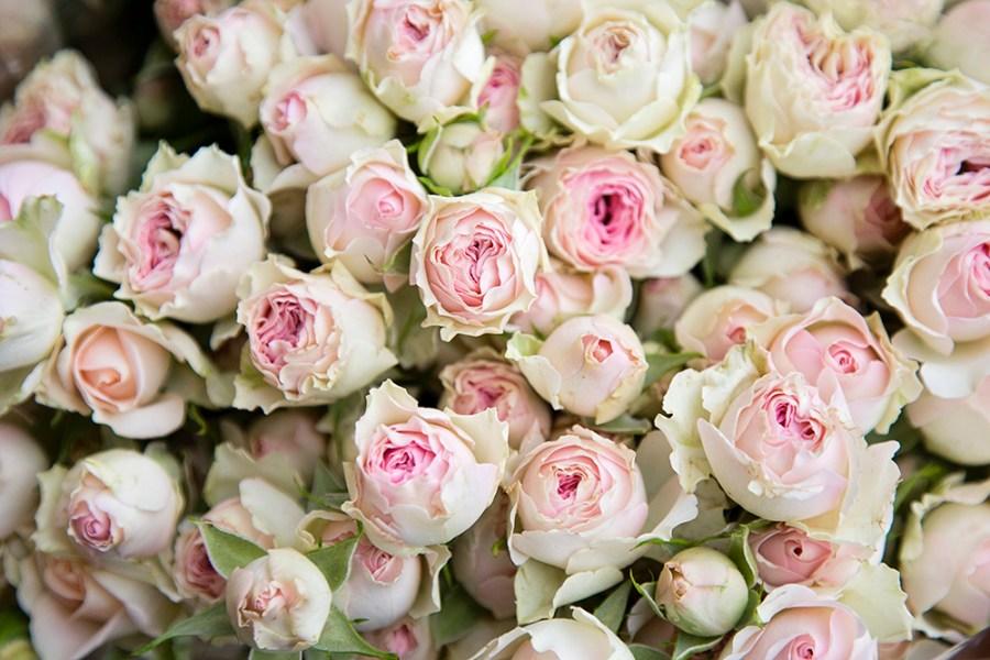 Spray Rose Dinara
