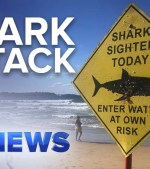 Man-in-hospital-after-suspected-shark-attack-near-Sydneys-Manly-beach-Nine-News-Australia