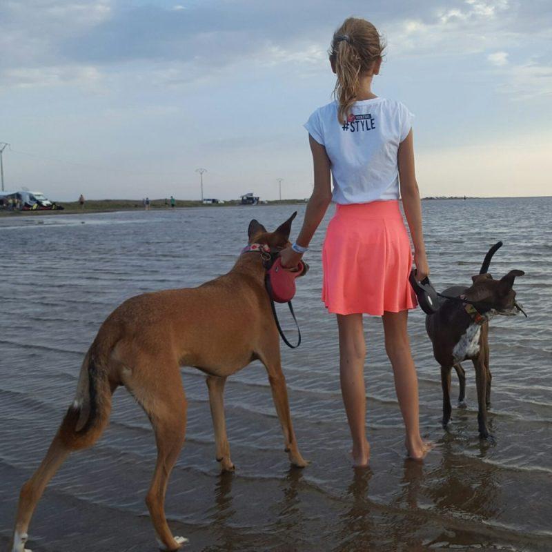 Rust zacht mandgenoten en partners in crime   verlies van honden