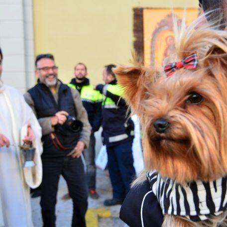Sant Antoni El Perello reistip
