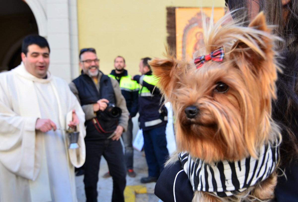 Sant Antoni Abat | De gezegende huisdieren van El Perello