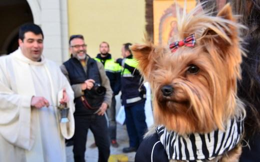 Sant Antoni Abat | El Perello | les tres tombs | gezegende huisdieren