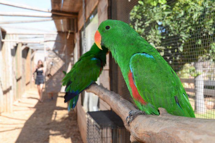 Papagaaitje leef je nog