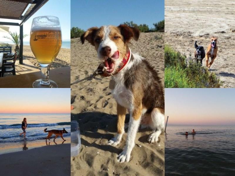Stranden Terres de l'Ebre | Stranden Terresdelebre | Stranden Ebro Delta | Strand Terres de l'Ebre
