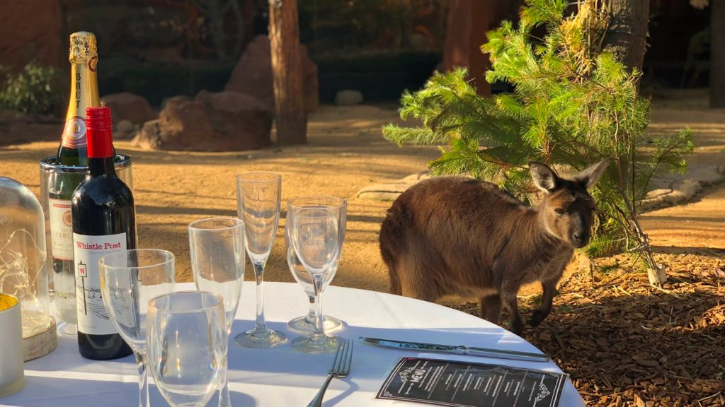 Spend Valentines Day with Kangaroos and Champagne