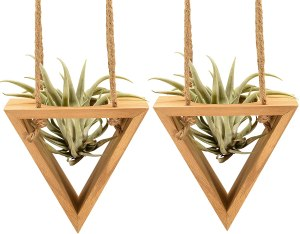 Triangle Airplant Holder