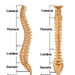 Spine Anatomy Overview
