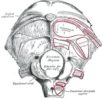 base-skull