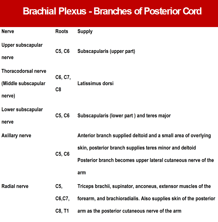 Branches from Posterior Cord of Brachial Plexus