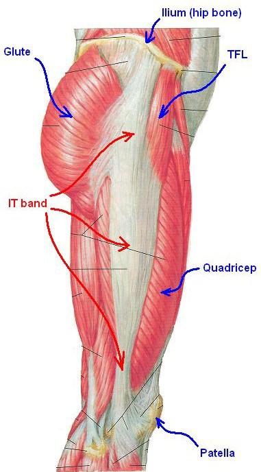 Iliotibial band anatomy
