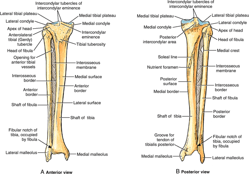 Tibial Shaft Fractures Bone And Spine
