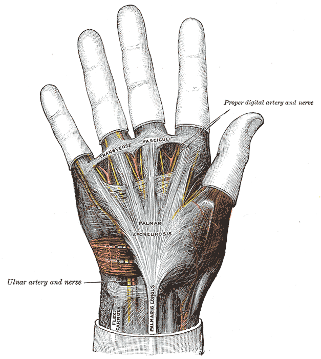Flexor Tendon Pulley System of Hand | Bone and Spine