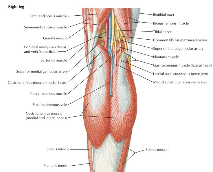 Anatomy of popliteal fossa