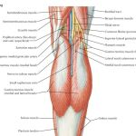 Popliteal Fossa Anatomy and Contents