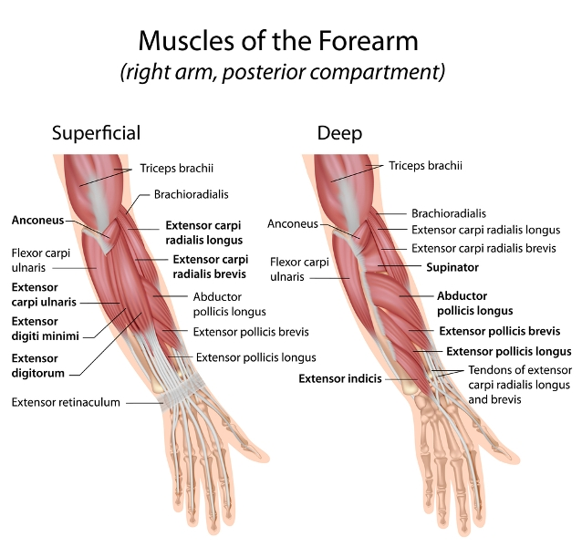 Hand Diagram Including Joints Wire Data Schema