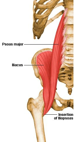 Ilio-psoas muscle