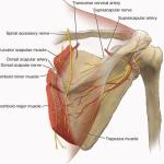 Dorsal Scapular Nerve Entrapment Syndrome
