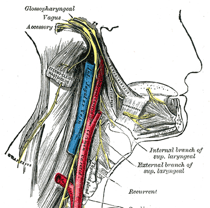spinal accessory nerve course