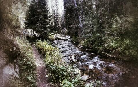 The trail along Cottonwood Creek