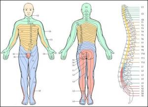 Dermatome map for spinal pain | Joint Replacement Patient