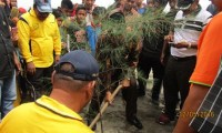 Dicanangkan, Penanaman 1000 Pohon Sepanjang Pantai Bireuen