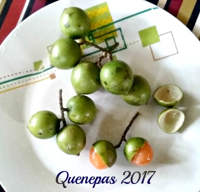 quenepas2017-400x358