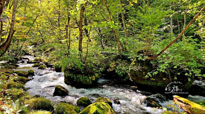 (東北-青森) 奧入瀨溪流賞楓之旅~宛如世外桃源般的山林美景與瀑布溪流