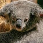 明日からオーストラリアに行きます!観光でもビザが必要!取得方法を公開