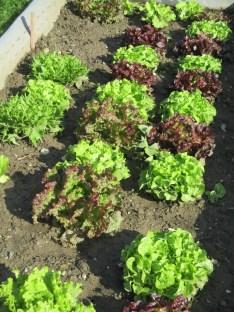 la planche des salades