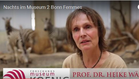 Nachts im Museum – Der Film