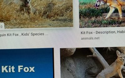 The KitFox and Lots of Trouble.