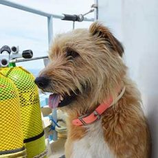 Maggie the ships dog