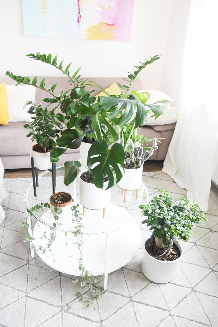 pflegeleichte-zimmerpflanzen-modern