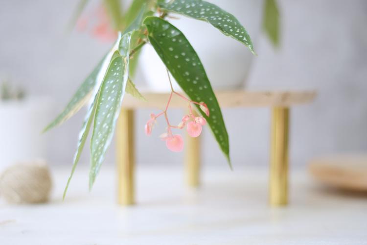 Pflanzenstaender-diy