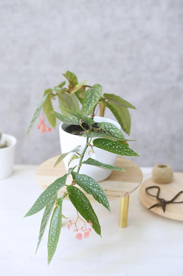 Pflanzenstaender-selber-machen