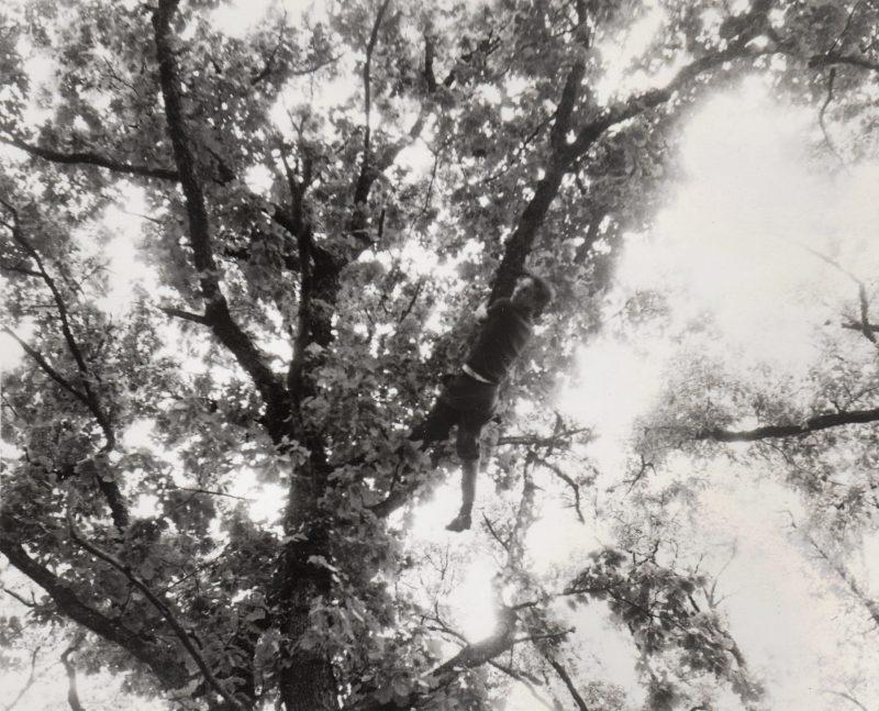 dans-les-arbres