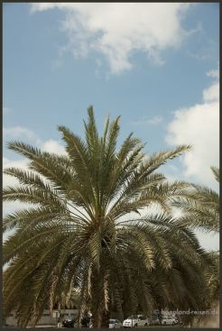 2011 Dubai 12