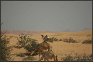 2011 Dubai 25