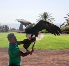 Fuerteventura 2017-27