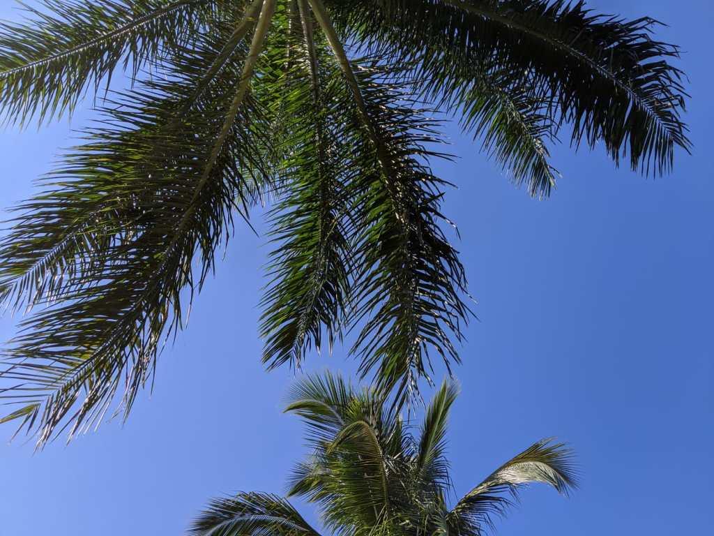 Photos de palmiers à Miami