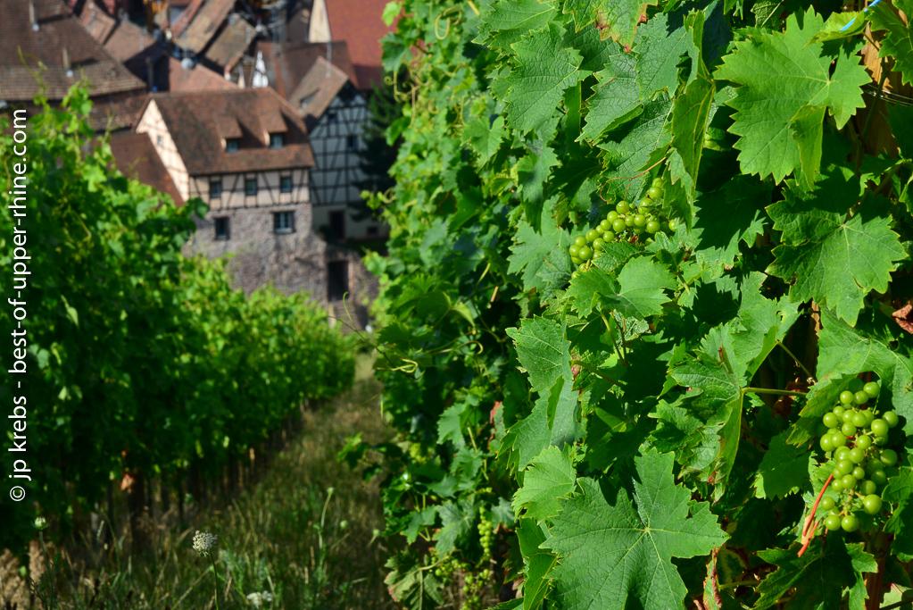 Riquewihr : Bonnes adresses de vignerons