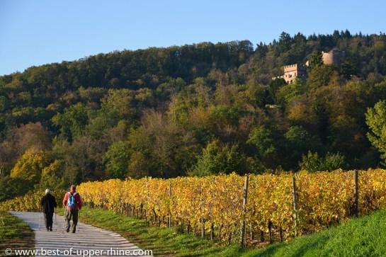 Promenade entre Châtenois et Kintzheim, au pied du château de la Volerie des Aigles.