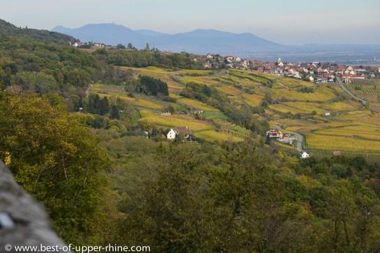 Vignobles vus depuis le Schauenberg