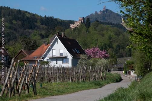 Haut-Koenigsbourg et château de Kintzheim mi-avril