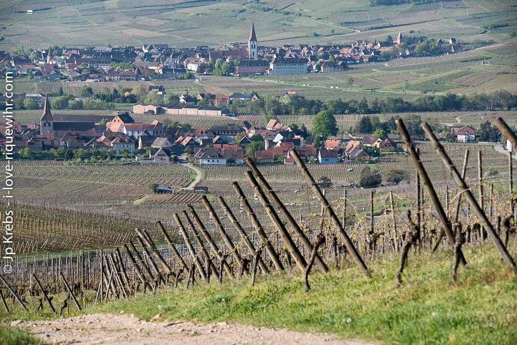 Kientzheim et Ammerschwihr vus depuis l'Oberberg sur les hauteurs de Riquewihr.